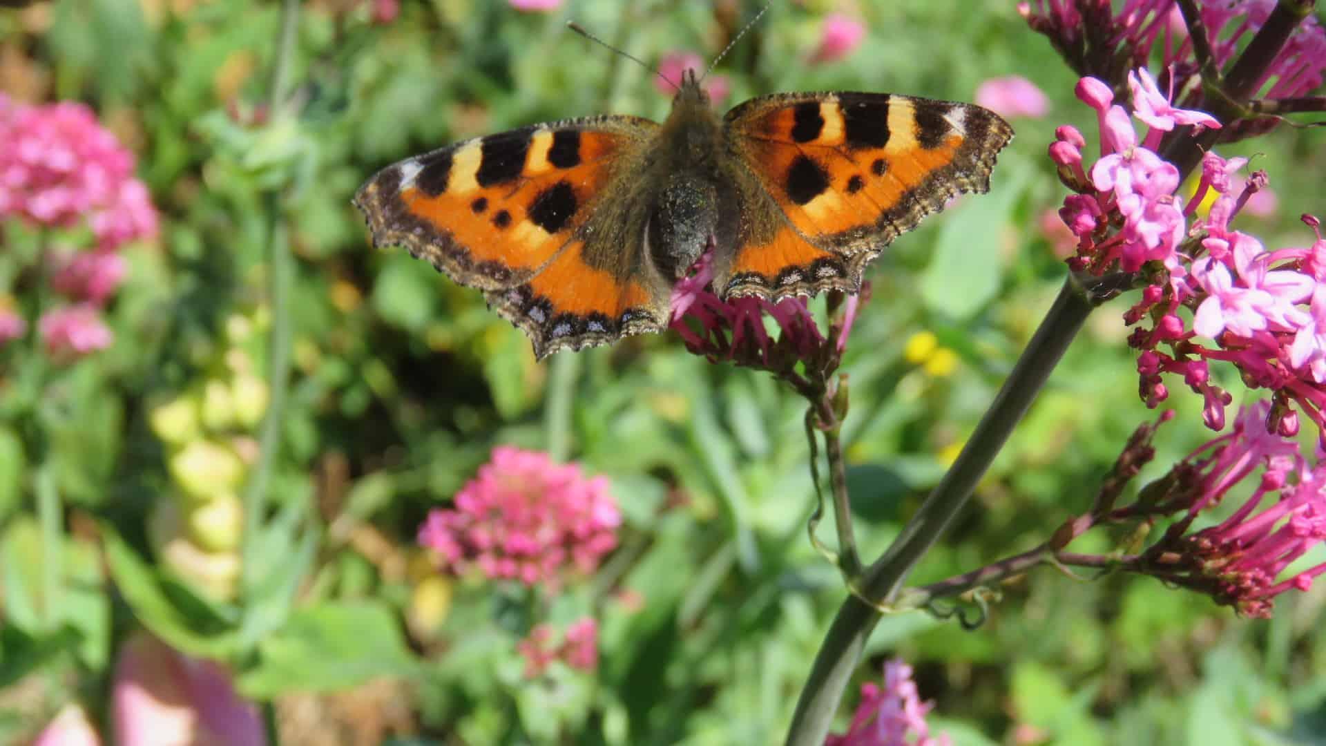Wildlife holidays Exmoor